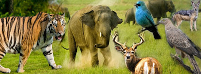 Oldest National Park in India Jim Corbett National Park Uttarakhand