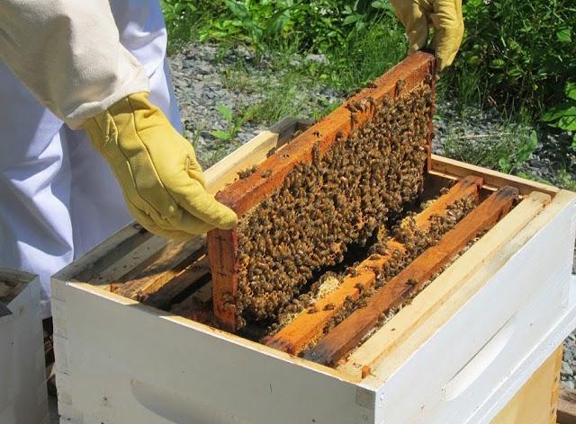 Επιθεώρηση μελισσιού: Οδηγίες και μυστικά για να γίνεται εύκολα και σωστά