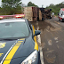 Caminhão tomba matando pelo menos cinco cavalos na BR-290, em Alegrete