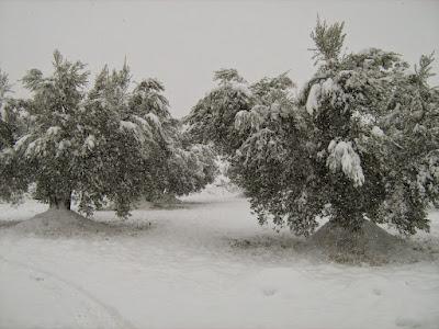 clima, Beceite, nieve, frío, nevada, está nevando, Beseit, neu, no hi aneu, on hi ha neu, fresqueta, fresca, frescota