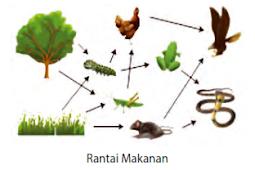 Soal Evaluasi Interaksi Dalam Ekosistem