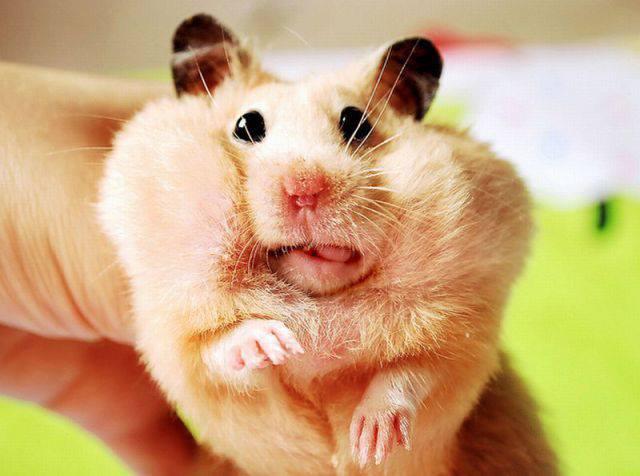 El tal yisus es el ardido ratón pelmex jajaja...