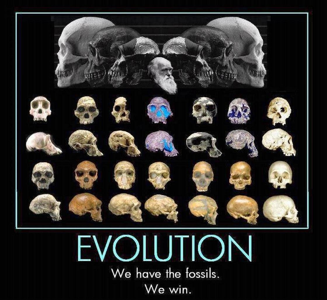 Acerbic Politics Evolution