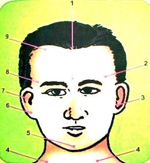 Kepala Bagian Depan