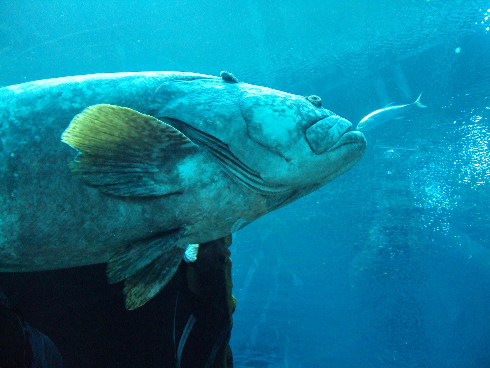 The Georgia Aquarium - A Whale Shark of a Good Time - The ...