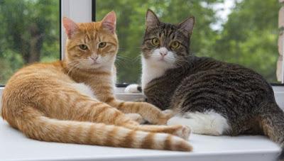 imagen de un gato y una gata echados en la ventana de una casa