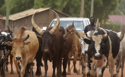 fulani kill police benue remove eyes nose
