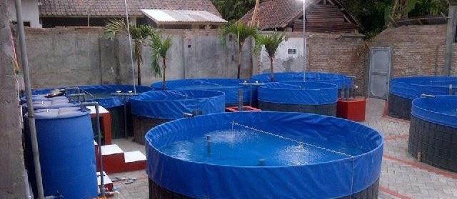 Lokasi Kolam Terpal yang Bagus dan Strategi untuk Budidaya Ikan