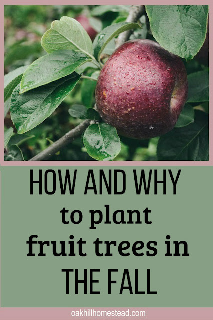 Fall is an excellent time to start an orchard. Learn why and how to plant fruit trees.