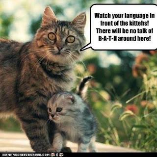 how to speak to your cat