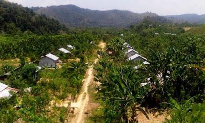 Transmigran di Toraja