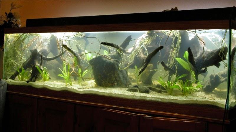 Amazon Aquarium Biotope Aquascaping Peru