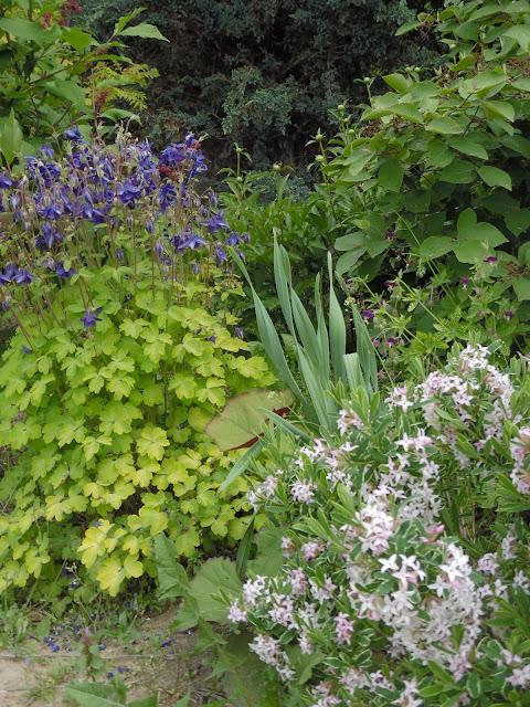 ogród przy szkółce