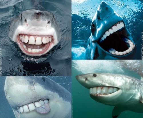 sharks_without_pointy_teeth_funny_pic
