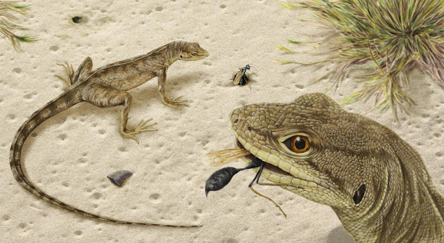 Oldest, most complete iguanian fossil in the Americas illuminates lives of lizards in Age of Dinosaurs