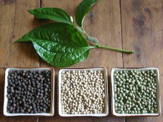 Obat Herbal dari Merica