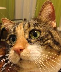 Cat looking left
