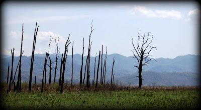 Grassland in Dhikala Zone of corbett
