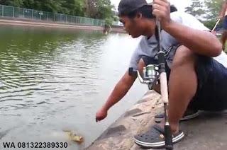 Umpan Serbuk Ikan Mas Yang Cocok Di Segala Cuaca