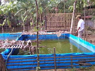 cara saluran pembuangan pada kolam terpal, cara membuat kolam terpal ukuran kecil, cara membuat kolam terpal di atas tanah, cara membuat kolam terpal dengan bambu, cara membuat kolam terpal sederhana, cara membuat kolam terpal ikan nila, cara membuat kolam terpallele sangkuriang.