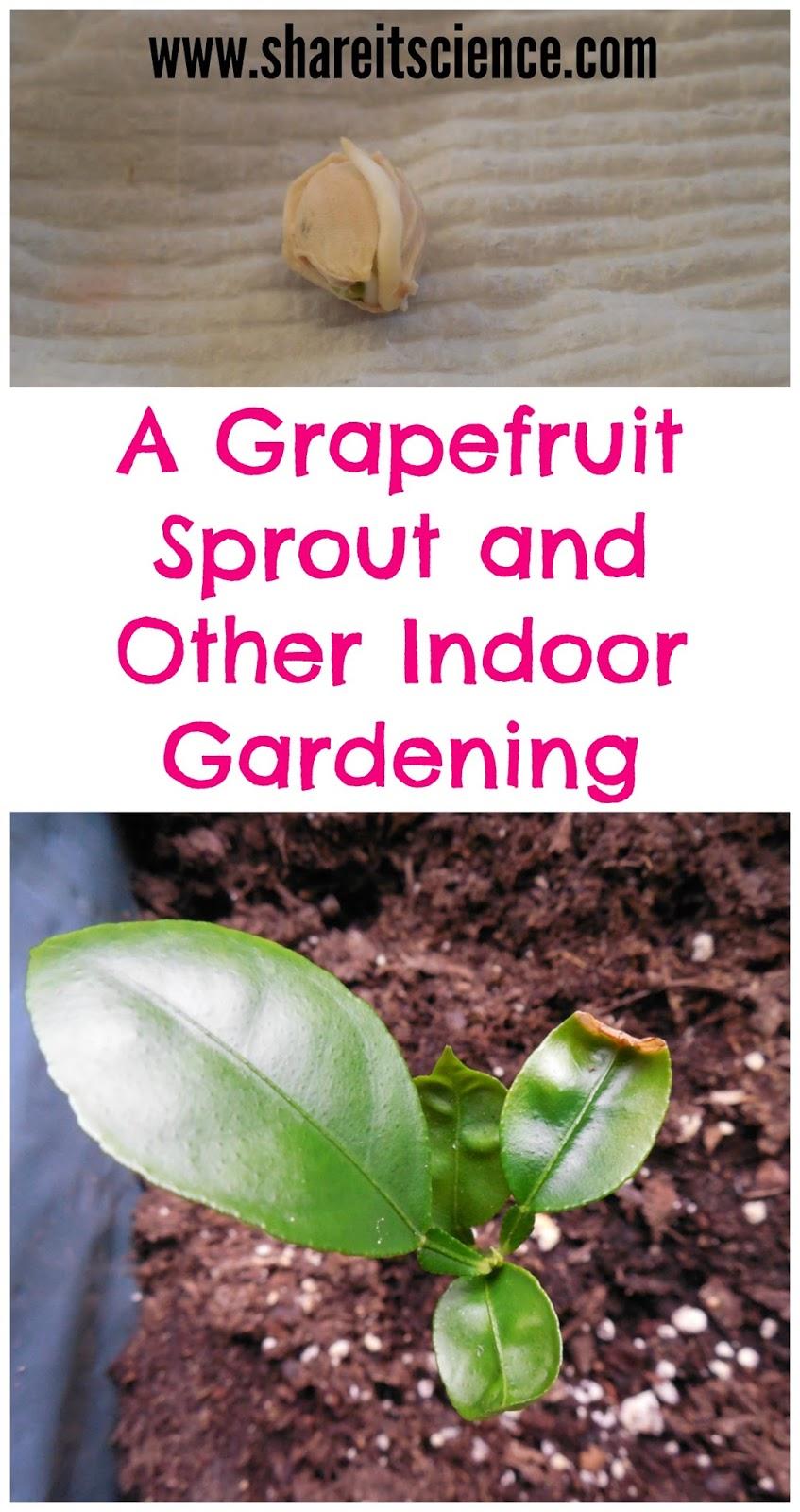 Kitchen Scrap Gardening Share It Science January 2015