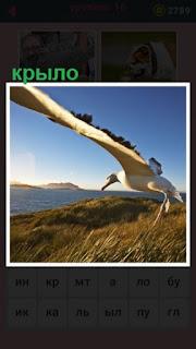 большое крыло птицы над равниной, над которой она пролетает