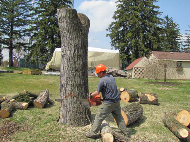 Top Rated Tree Lopping Services in Sydney