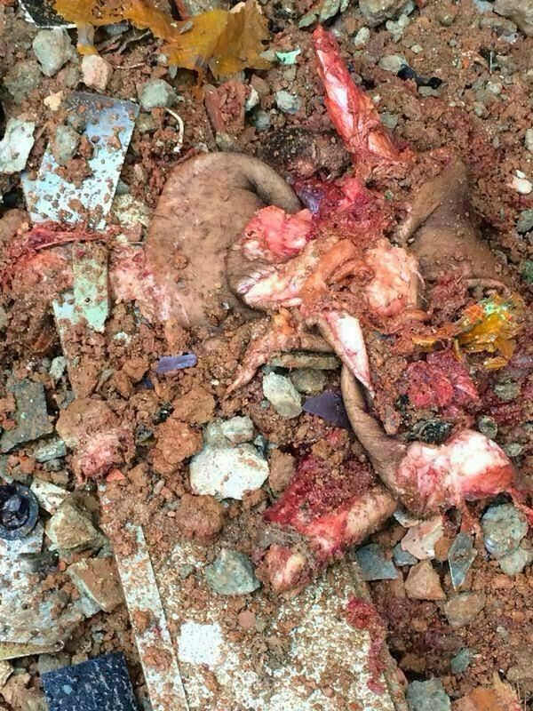 Fotos mamonas assassinas mortos 92