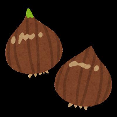チューリップの球根のイラスト