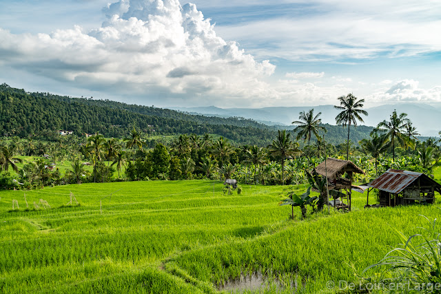 Rizières de Munduk - Bali