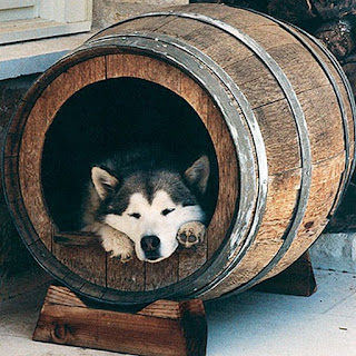 Dog in a Barrel
