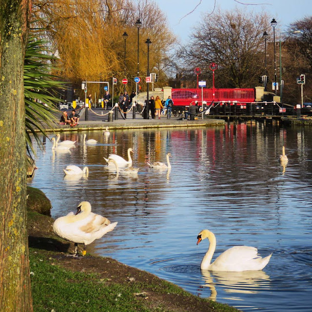 One Day in Dublin City Itinerary: the swans of Portobello