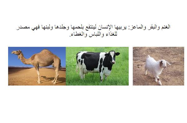 الحيوانات الأليفة و منافعها
