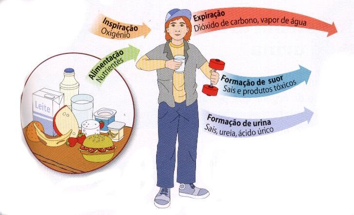 características de la dieta mediterránea hoja cheet