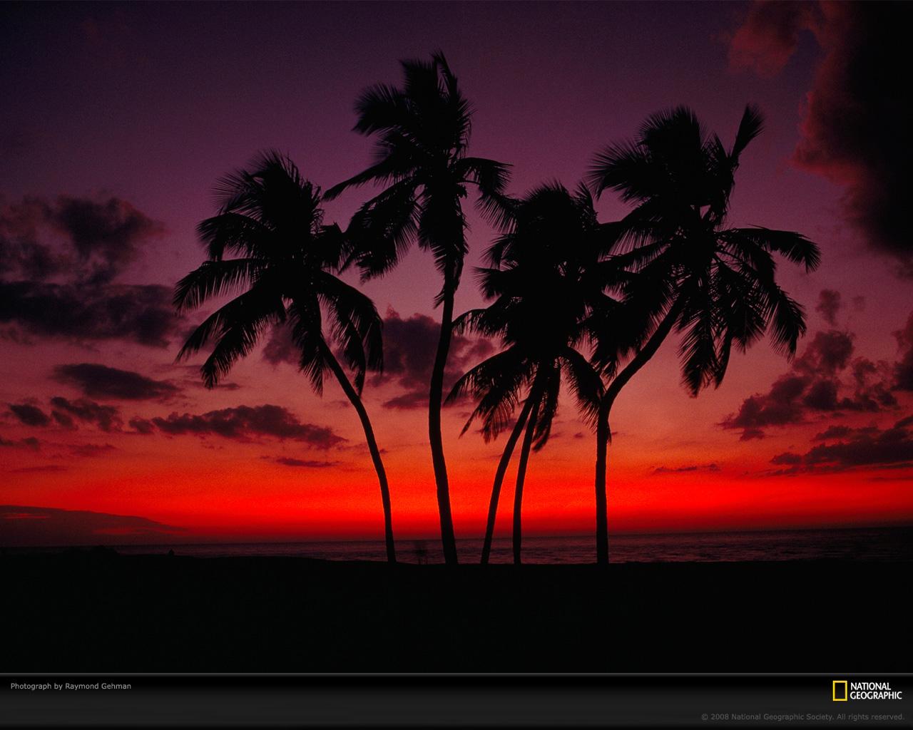 Sunset Palm Trees