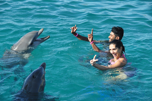 Swimming with Dolphins in Panama City Beach