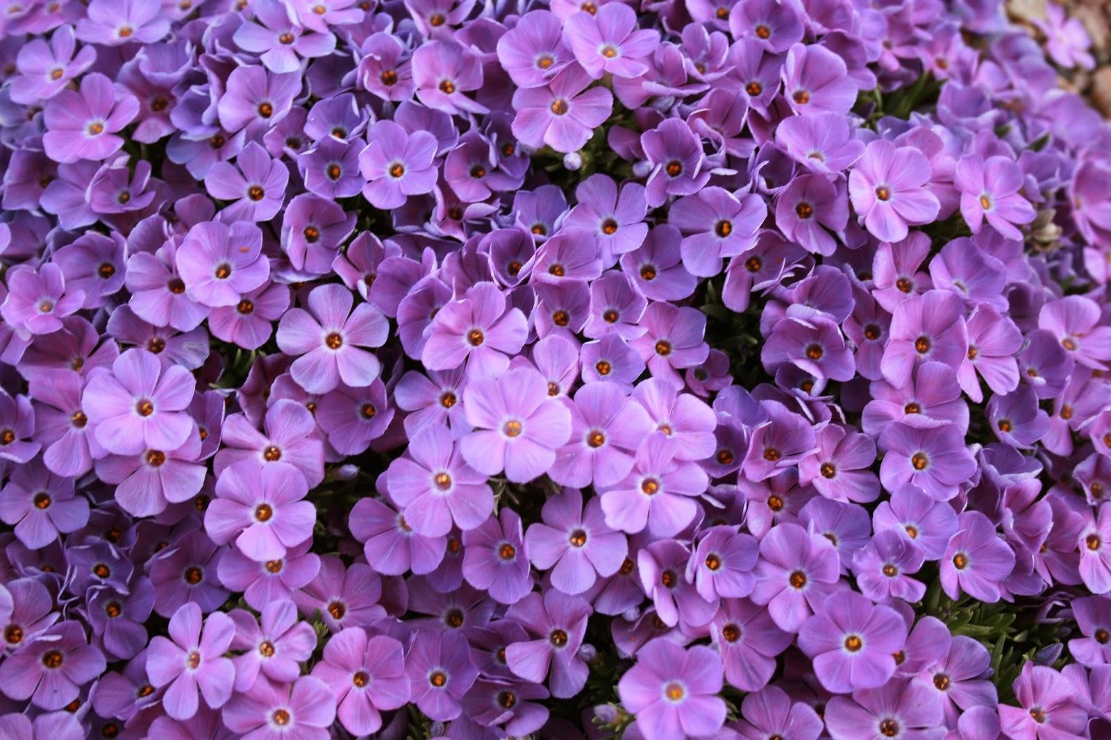 Pics Of Violet