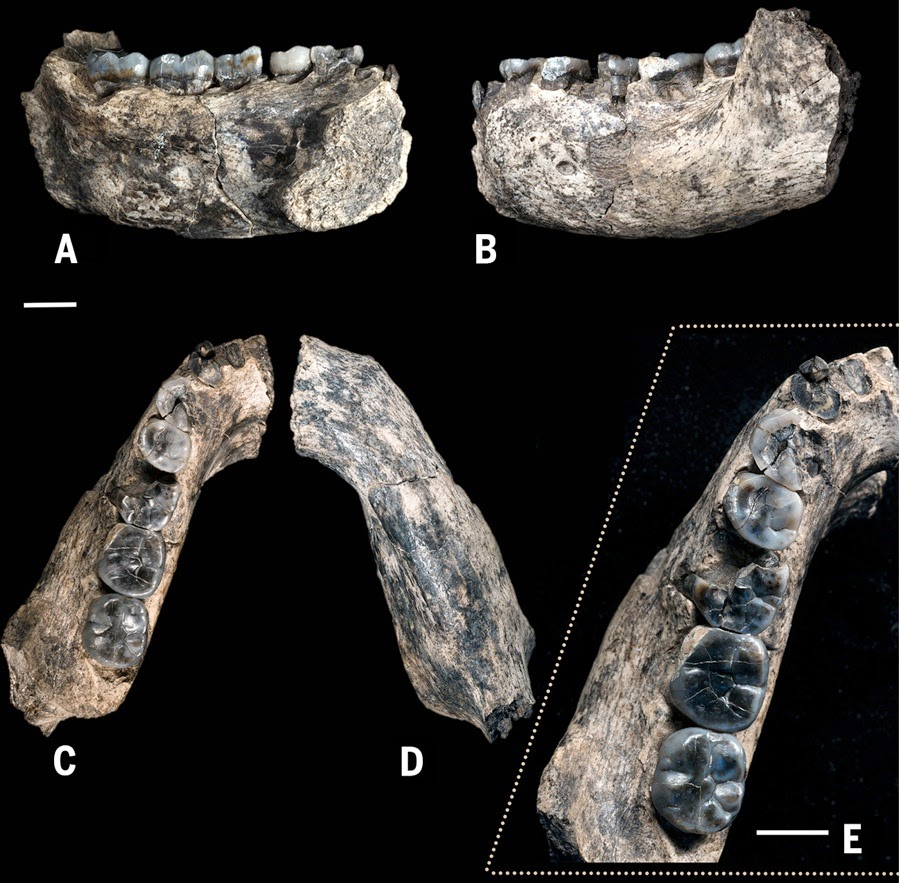 Life Began in Africa - 2,800,000 Years Old Fossils From