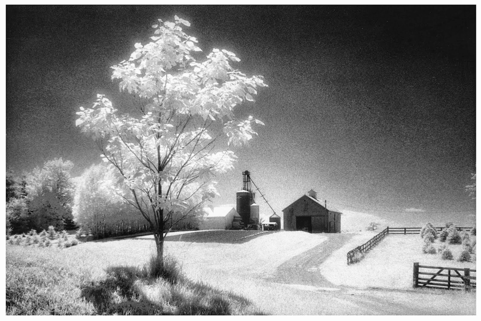 Jim Hill, Photo/Graphic Works: Christmas Tree Farm