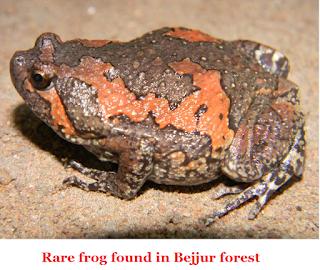 Rare frog found in Bejjur forest