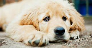 «Δικαίωμά σου να μη συμπαθείς τα ζώα, υποχρέωσή σου να τα σέβεσαι»