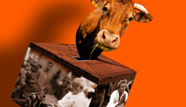 Cow Politics