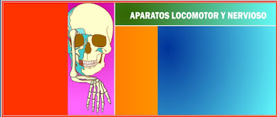 http://www.ceiploreto.es/sugerencias/averroes/manuelperez/udidacticas/udanatomia/nervioso/index.htm