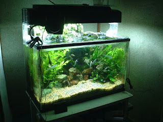 HOW TO CHOOSE THE FIRST AQUARIUM FISH?