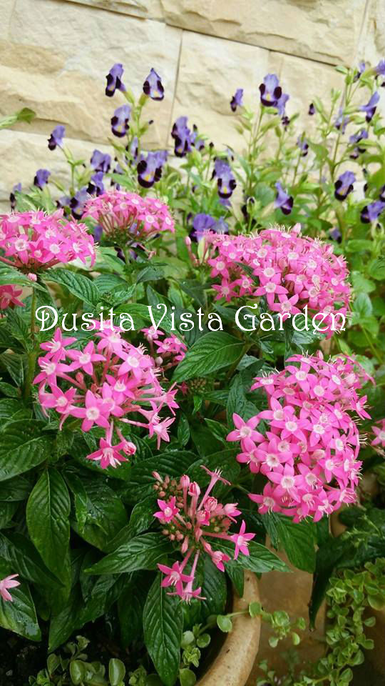 Want to see more. Click Label: gardening