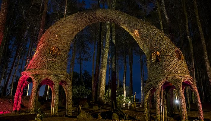 Spot Foto Malam di Pinus Pengger
