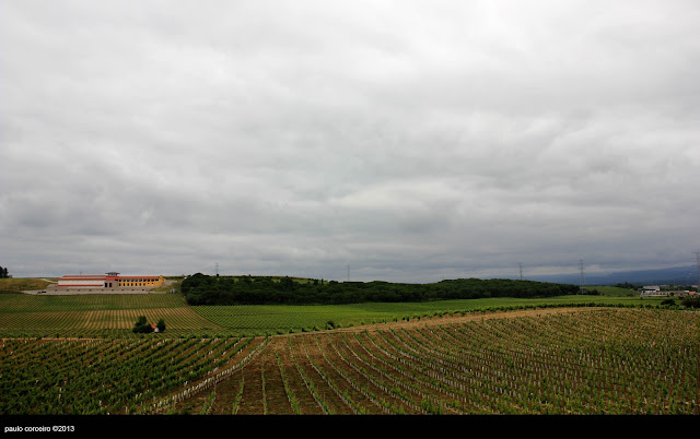 BAIRRADA WINE COUNTRY