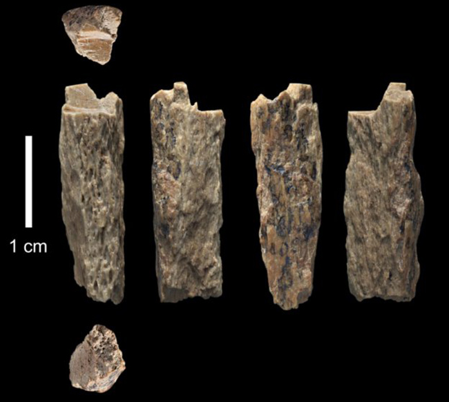 Penelitian The genome of the offspring of a Neanderthal mother and a Denisovan father