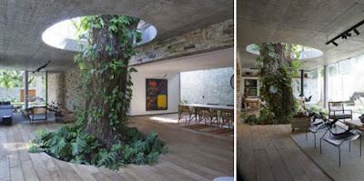 Idea para decoración de living con árbol vivo