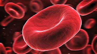 Seberapa Banyak Darah Pada Tubuh Kita